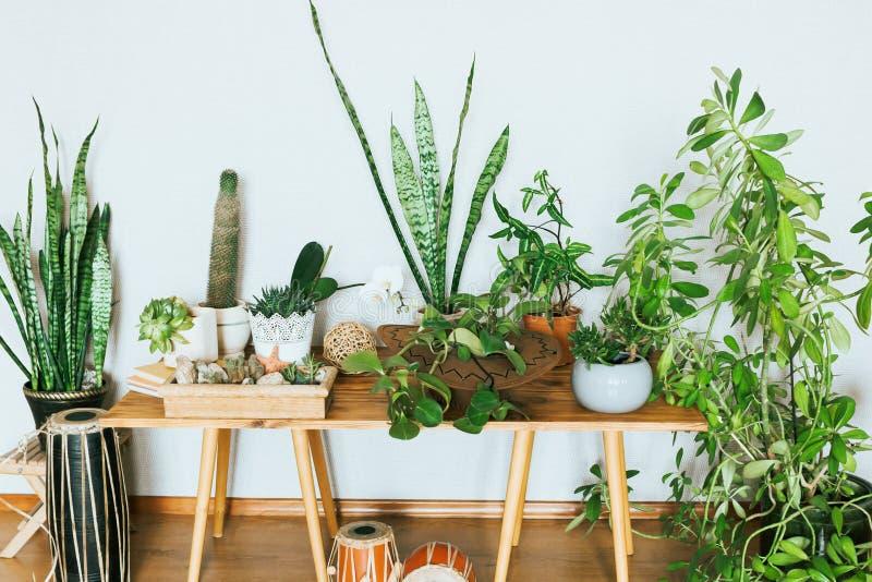 Plantas em uns potenciômetros Plantas internas em um interior acolhedor moderno imagens de stock royalty free