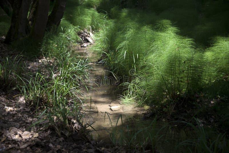 Plantas en bosque imagen de archivo