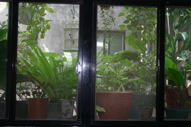 Plantas en conserva delante de la ventana de la sala de estar imágenes de archivo libres de regalías