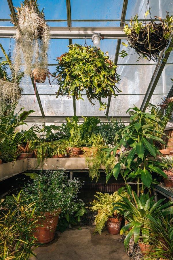 Plantas en el invernadero en los jardines públicos de la colina de la onda, el Bronx, New York City imágenes de archivo libres de regalías