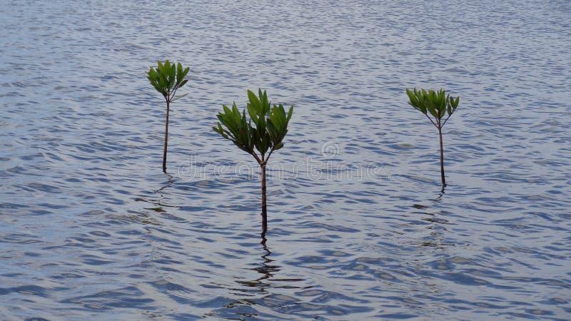 Plantas en el océano foto de archivo