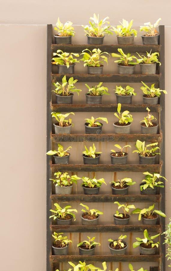 Plantas en el piso imagen de archivo libre de regalías