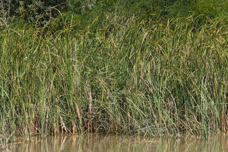 Plantas en el primer de la orilla del río, foco selectivo, DOF bajo foto de archivo