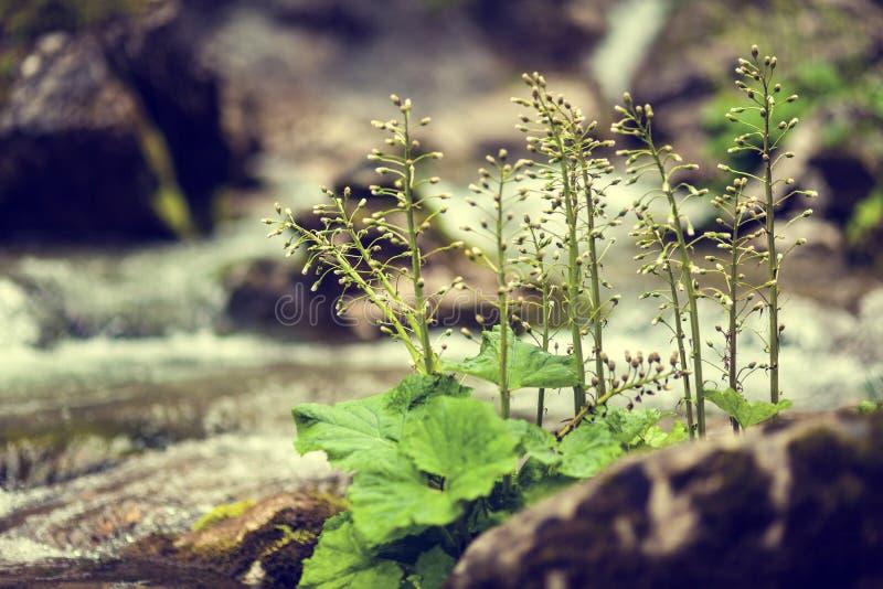 Plantas en el río imagen de archivo