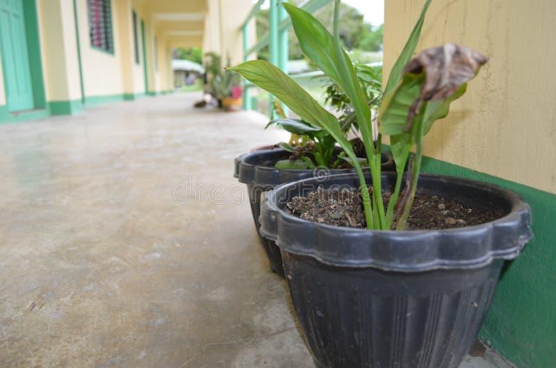 Plantas en florero imagenes de archivo
