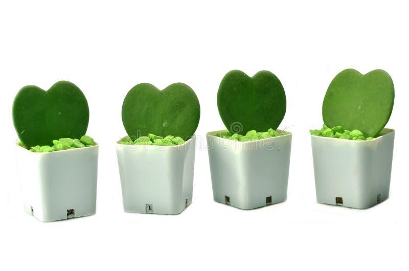 Plantas en forma de corazón imagen de archivo libre de regalías