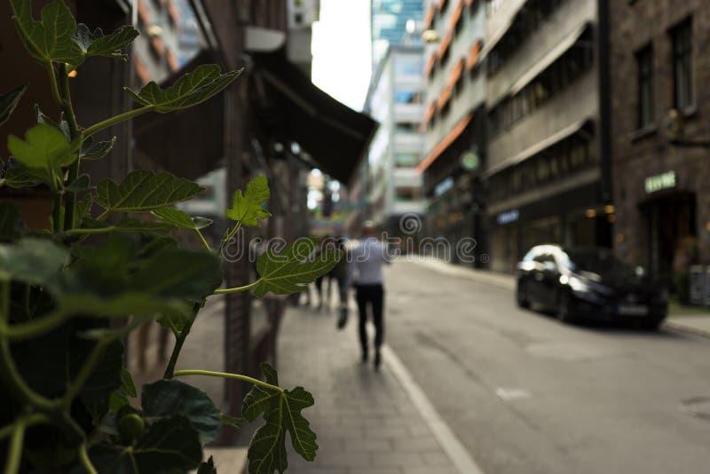 Plantas en la ciudad imágenes de archivo libres de regalías