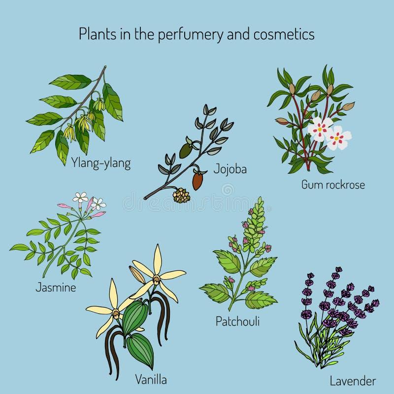 Plantas en la perfumería y el cosmético libre illustration