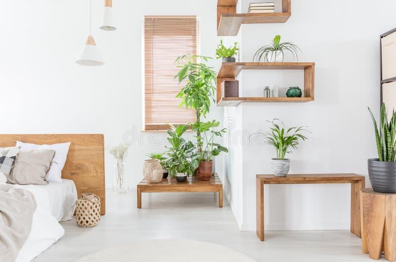 Plantas en la tabla de madera en el interior blanco del dormitorio con la cama al lado de la ventana con las persianas Foto verda fotografía de archivo libre de regalías