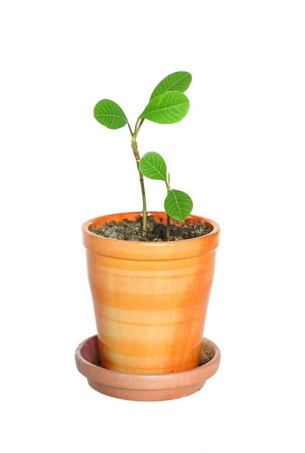 Plantas en maceta fotografía de archivo