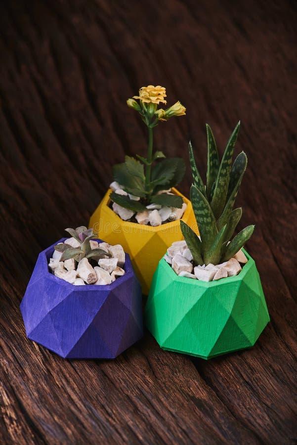 Plantas en potes concretos coloreados en fondo de madera Limpie la foto Poste violeta, verde y amarillo foto de archivo