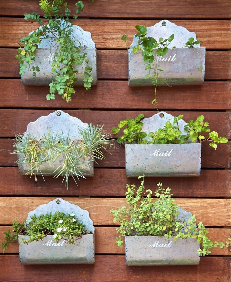 Plantas en una caja foto de archivo
