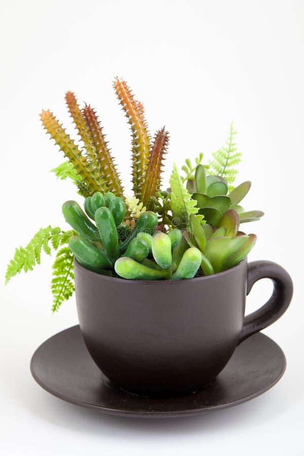 Plantas en una taza imagen de archivo