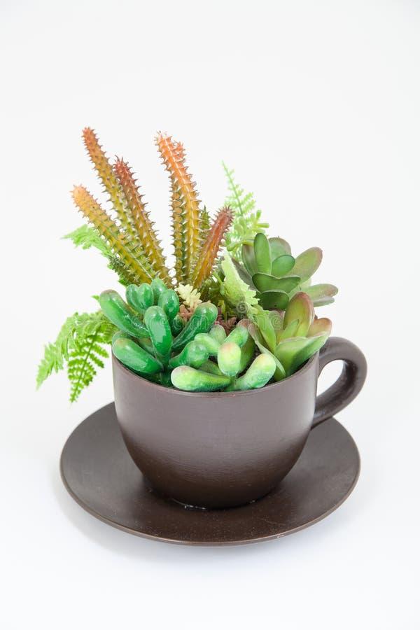 Plantas en una taza. concepto de la primavera fotos de archivo