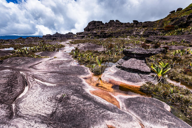 Plantas endémicas muy raras en la meseta de Roraima - Venezuela fotos de archivo