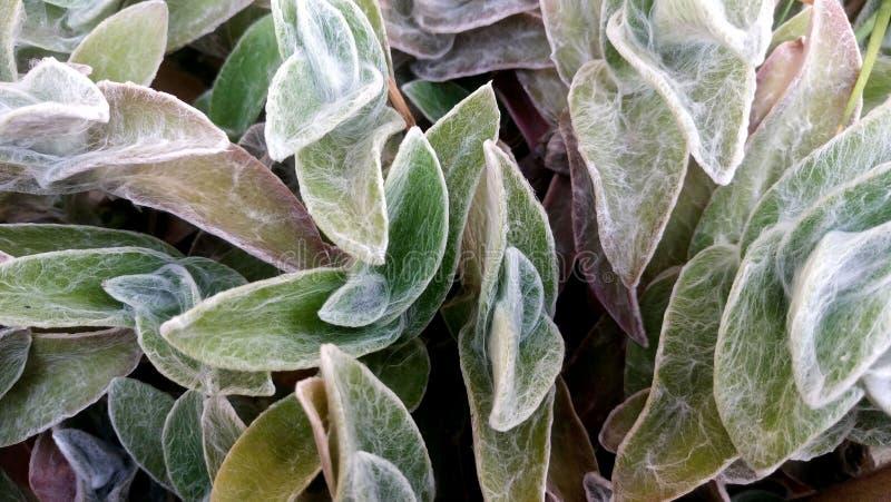 Plantas espeluznantes fotos de archivo