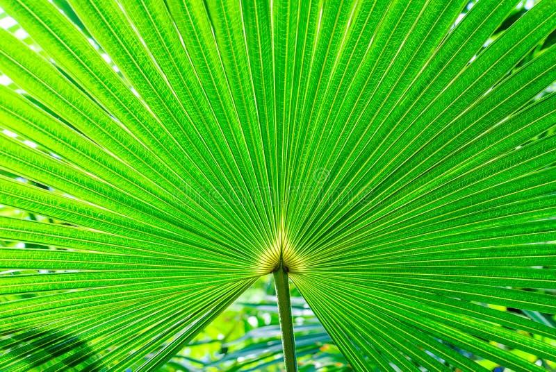 Download Plantas exóticas foto de archivo. Imagen de cubo, frescura - 42441054