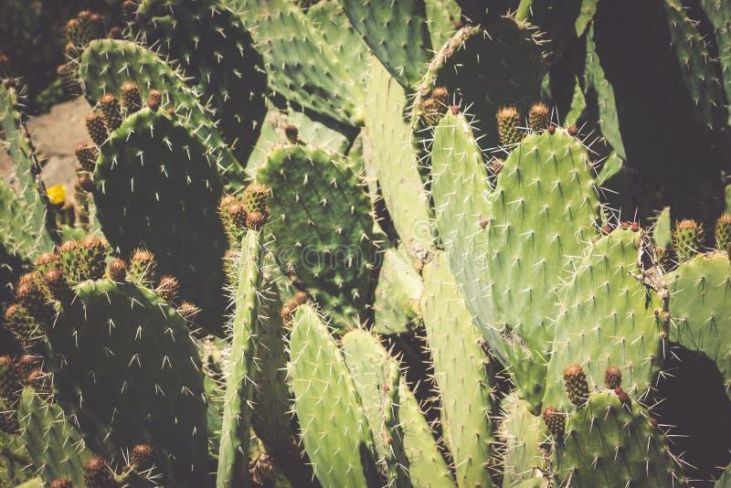 Plantas exóticas Primer de un cacto espinoso foto de archivo libre de regalías