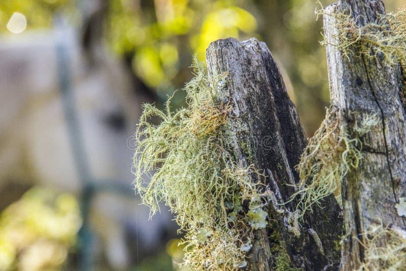 Plantas exteriores brasileiras fotografia de stock