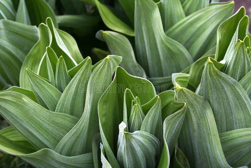 Plantas frescas fotografia de stock