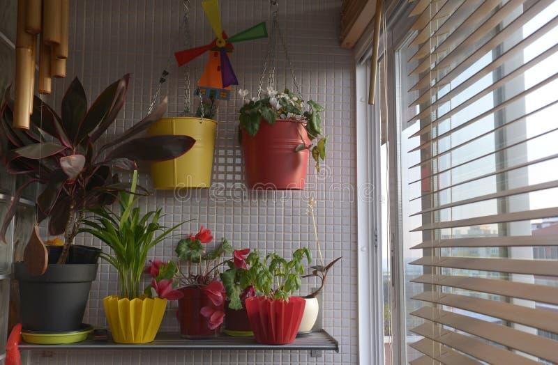 Plantas home pela janela, Sunny Interior, por do sol imagem de stock