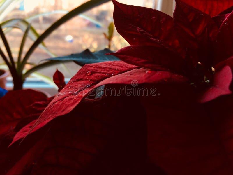 Plantas incre?bles rojas foto de archivo