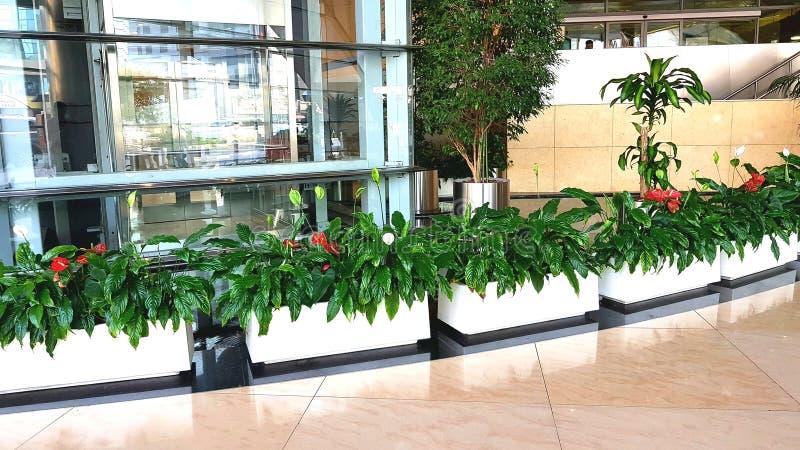 Plantas internas fotografia de stock royalty free