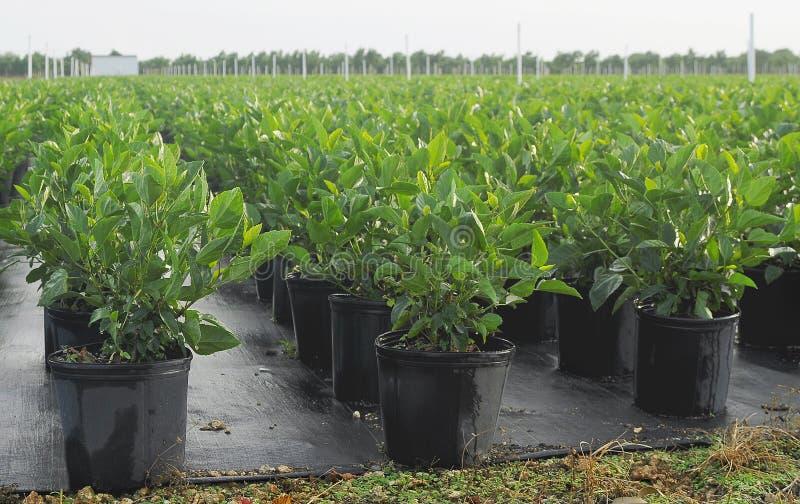 Plantas irrigadas imagenes de archivo