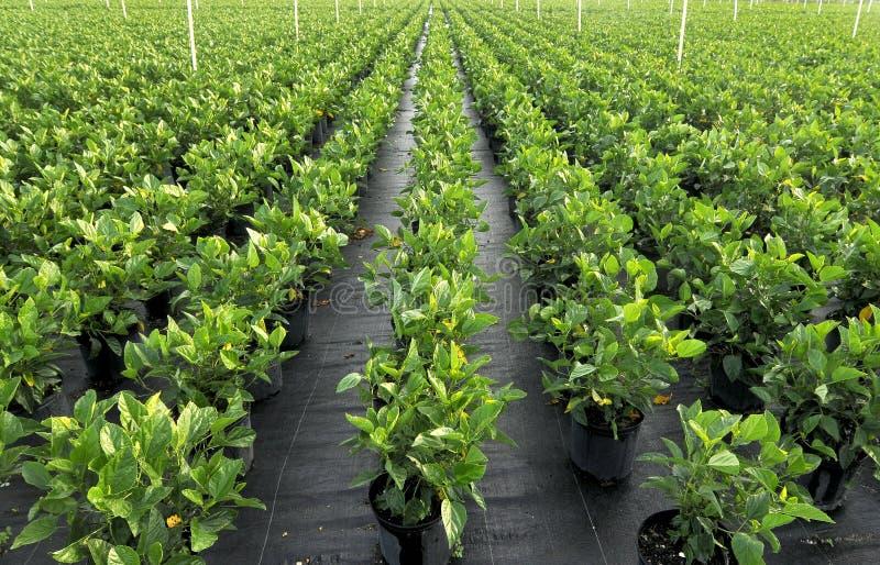 Plantas irrigadas fotografía de archivo