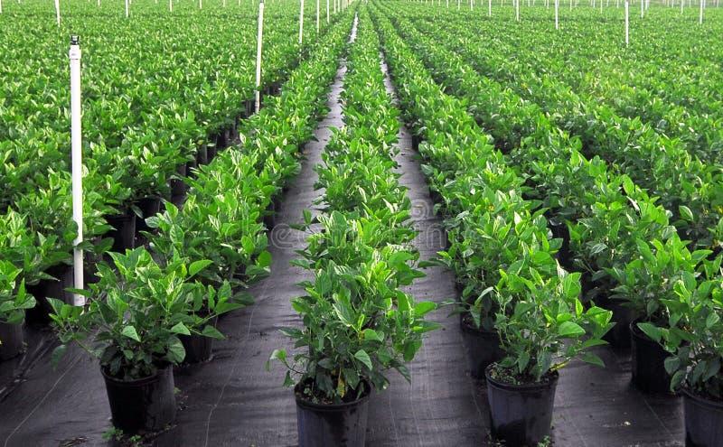 Plantas irrigadas verde imagenes de archivo