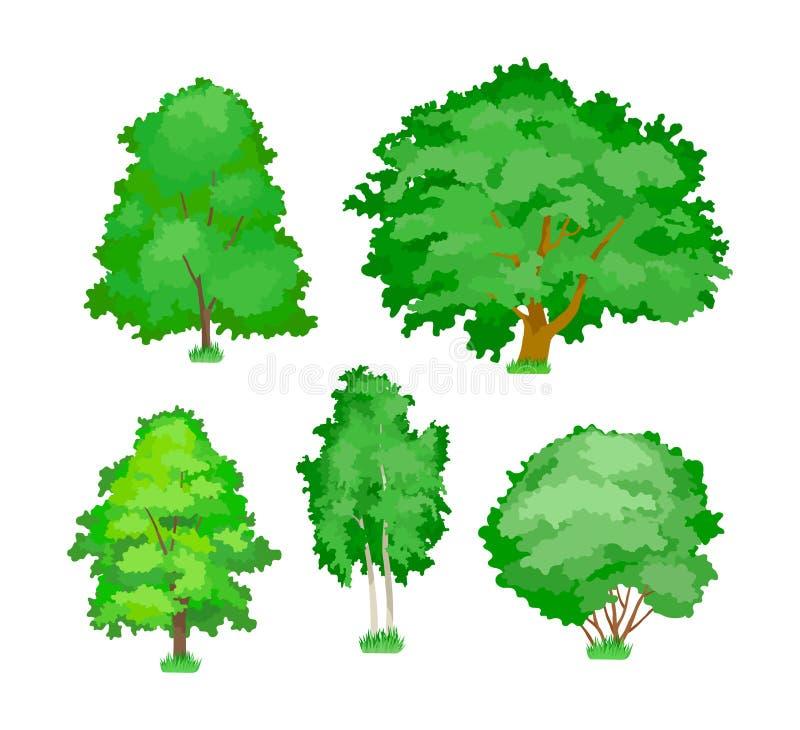 Plantas leñosas lindas, álamo temblón verde, amarillo, arce, roble, árboles de abedul ilustración del vector