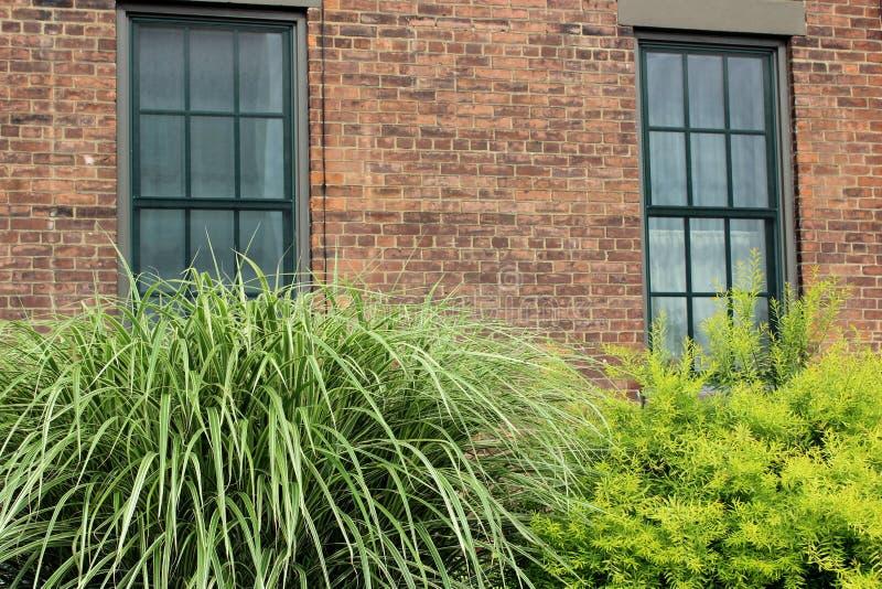 Plantas magníficas con el verdor sano que crece delante de la construcción de viviendas vieja del ladrillo fotografía de archivo libre de regalías