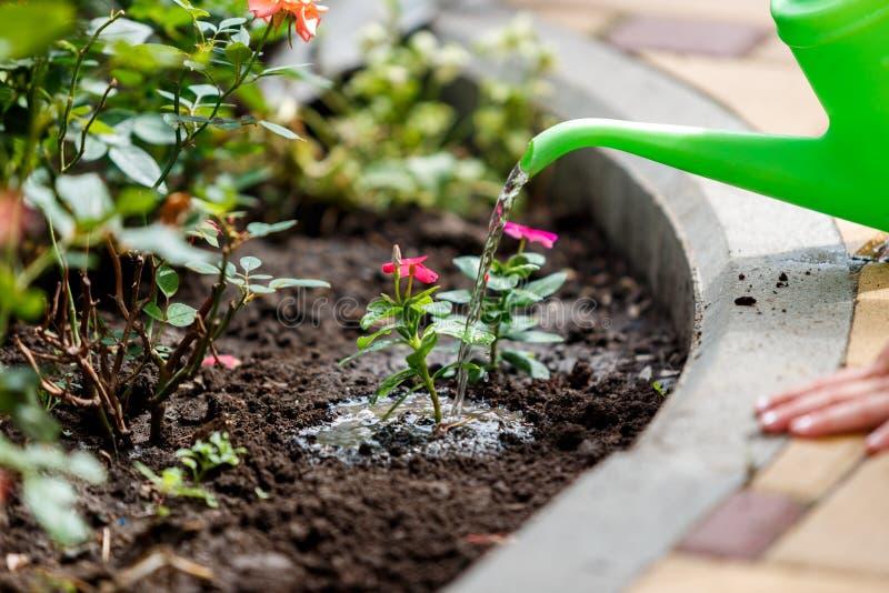 Plantas molhando da menina bonito no jardim fotos de stock royalty free