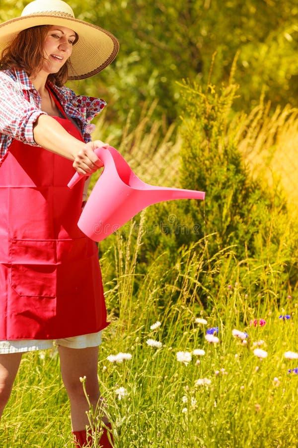 Plantas molhando da mulher no jardim foto de stock