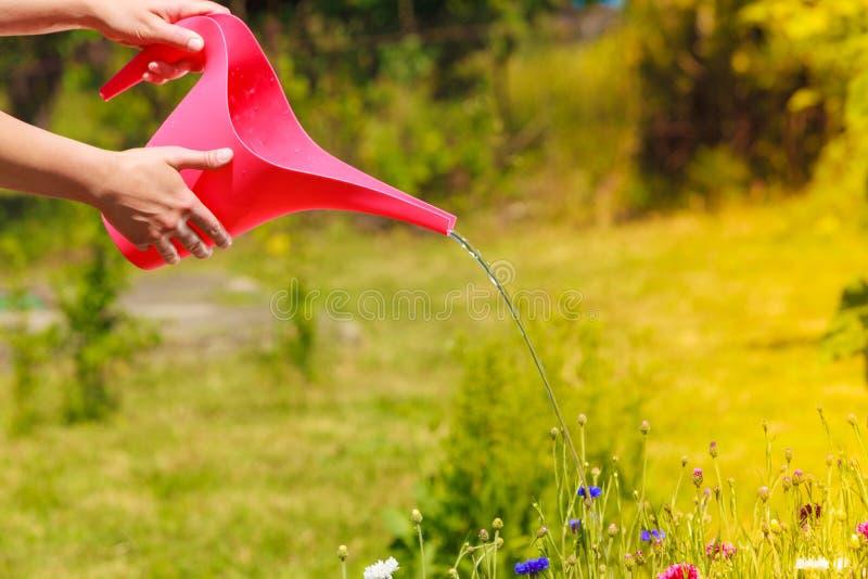 Plantas molhando das mãos da mulher no jardim imagens de stock