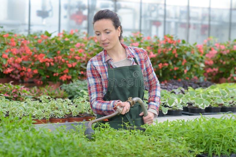 Plantas molhando de trabalhador fêmea no centro de jardim foto de stock