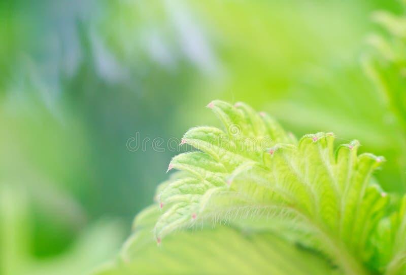 Plantas muito bonitas imagem de stock