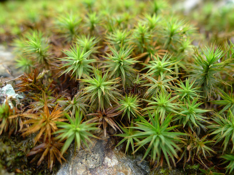 Plantas - musgos fotografía de archivo libre de regalías