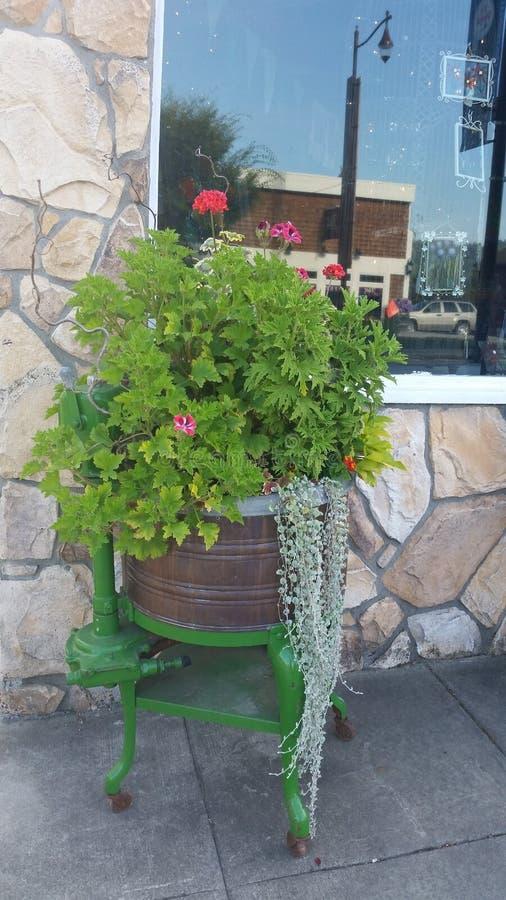 Plantas na arruela velha foto de stock royalty free