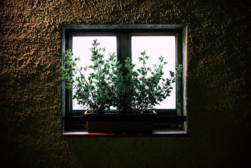 Plantas na janela para trás-iluminada fora da vista na noite imagens de stock