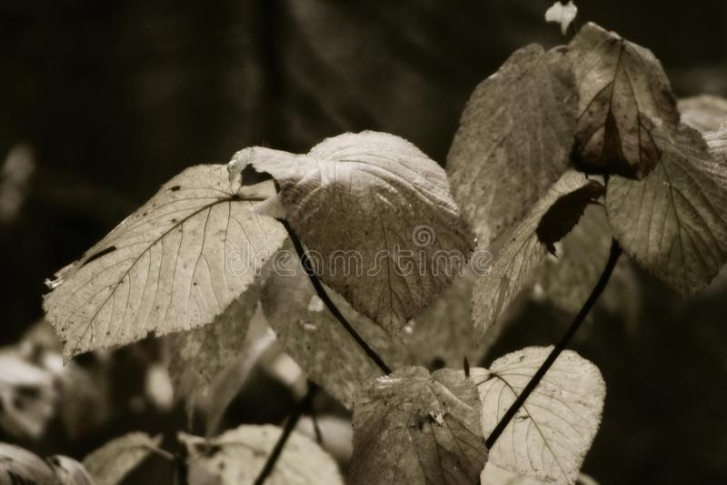 plantas nas madeiras imagens de stock
