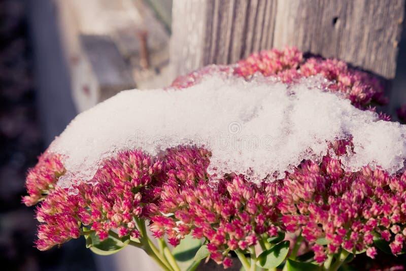 Plantas nevadas imagen de archivo