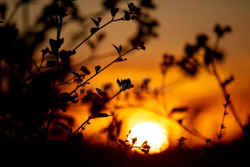 Plantas no campo ao pôr do sol fotografia de stock