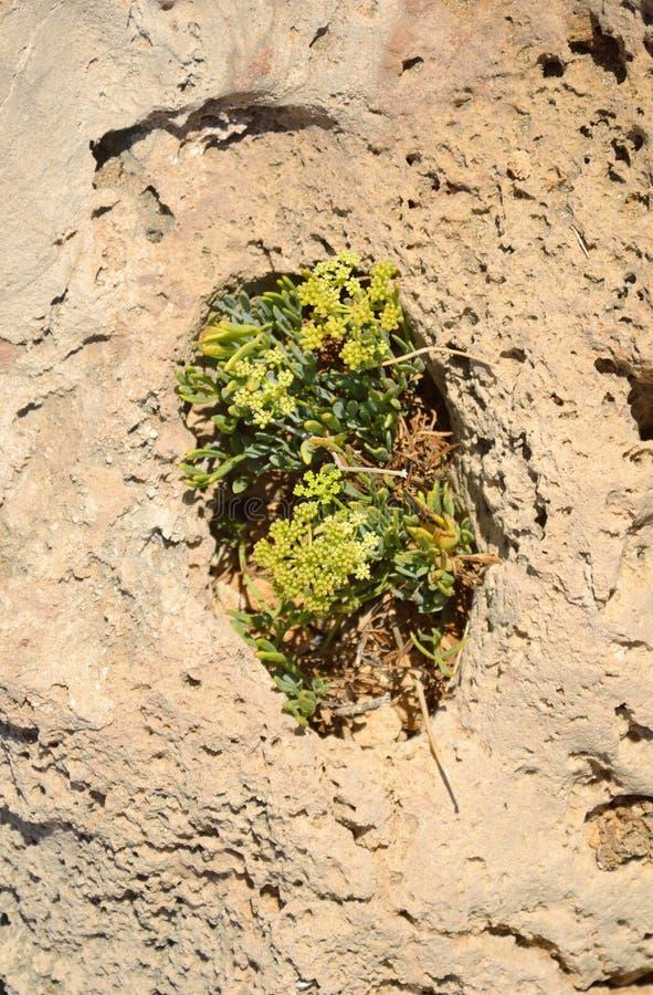 Plantas no furo da pedra calcária foto de stock royalty free