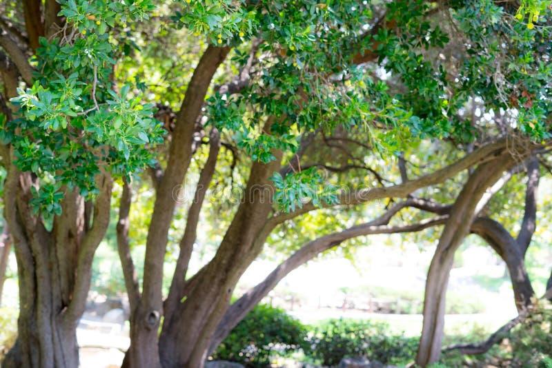 Plantas no jardim japonês imagem de stock