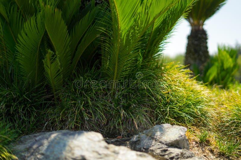 Plantas no jardim japonês fotos de stock royalty free