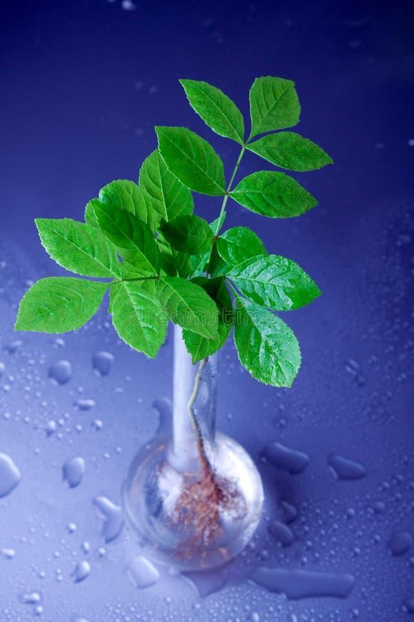 Plantas no laboratório imagem de stock