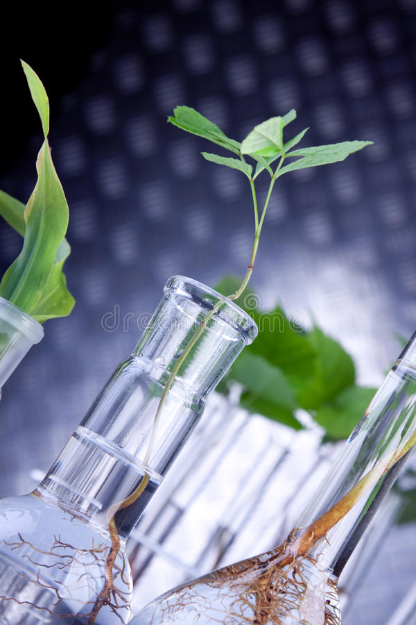 Plantas no laboratório imagens de stock royalty free