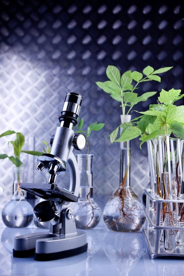 Plantas no laboratório fotografia de stock