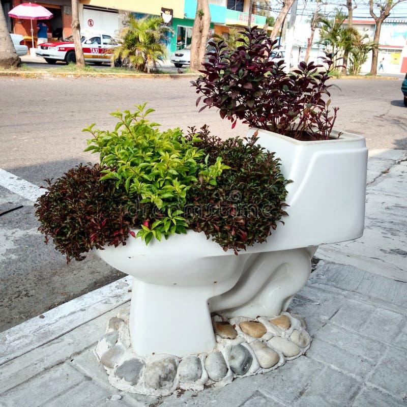 Plantas no toalete foto de stock
